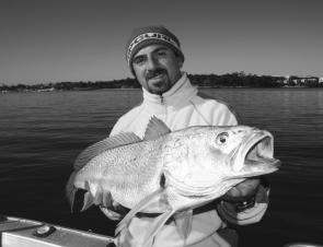 Jim Siriakis realises the value of schools of whitebait even when it comes to big jewfish.