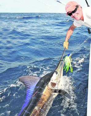 Colourful striped marlin can turn up at any time, but generally prefer the cooler water of autumn, winter and spring.