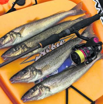 Whiting numbers have been encouraging. Land-based anglers are getting a fair crack at them, this month.