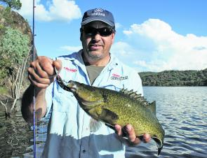 Smaller cod have been common at Pindari Dam in Northern NSW.