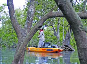 Jose Chavez from the US works the mangroves in his Hobie for bream.