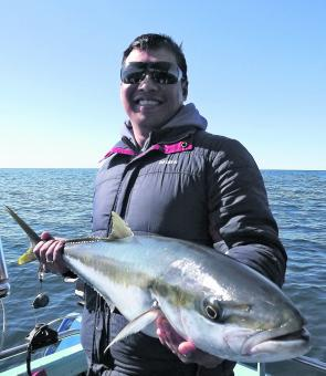 This lovely 85 cm kingfish was caught along the coast on a fresh downrigged squid head.