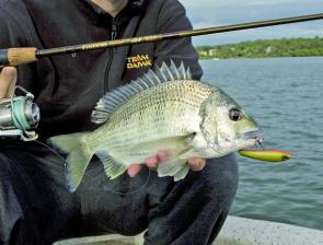Bream are on the chew and over the gravel patches in shallow water poppers and walk-baits are good options.