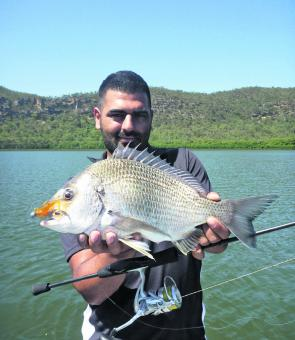 Big Bream like this will be on offer along the rock walls around Broken Bay this month.