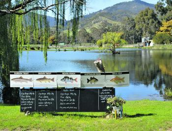 The main lake at the farm holds larger fish and offers the chance to catch all of the species available. There are some serious fish in this lake.