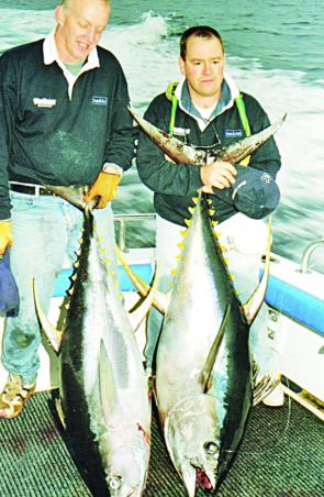 Yellowfin tuna are the golden nuggets many anglers visiting Bermagui try to find.