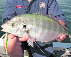 A nice silver trevally caught by the author recently.