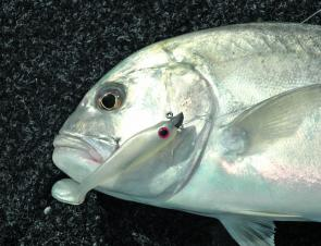 The trevally will really start firing up in the creeks and rivers in September.