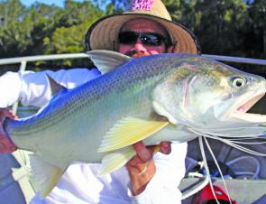 You just never know when you're trolling what will come along and threadfin salmon are by no means unusual in the Noosa River.