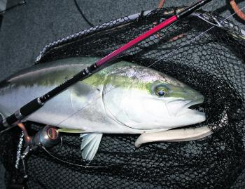 Soft plastic stickbait style lures work well when cast or trolled.