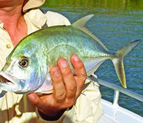 Trevally are keen at present, particularly at dawn.