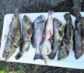 Variety is definitely one of the pluses this time of year and mixed bags like this are the norm over our local reefs.