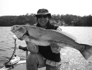 Mulloway like this 11kg fish have made many anglers happy. This fish was caught on a soft plastic at 9am.