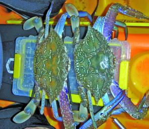 The warmer months are great for crabs. These were taken in Jacksons Creek from my kayak.