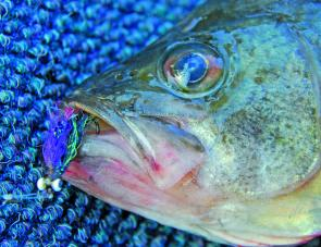 Vampire style flies such as this one shown are great on deep feeding bass.