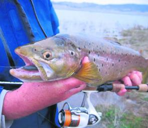 Big brown trout are still about in numbers. Early starts and late finishes focusing on shallow bays will put you in the best position to hook one.