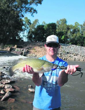 Dave Rava with a solid Murray cod taken in Old Man Creek.