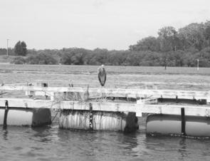 Oyster pontoons are ideal places to present light lures. Bird life on the structure can indicate the presence of bait and predatory fish.