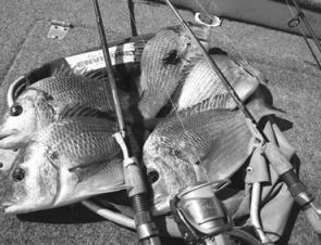 Any tournament angler would be very happy with this haul of bream taken with minimally-weighted lures.