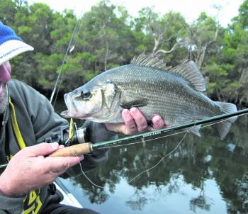 Plenty of huge perch are back in the Gippy Lakes and sinking hardbodied lures are the best tool for sure. Fighting them deep into the snags will see the fish try and win a few brawls, so to even up the contest, be sure to use 12lb leaders or more.