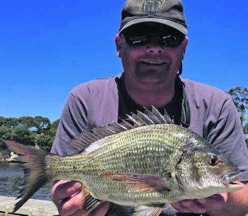 Bream have been firing well in the Glenelg.
