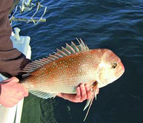 The snapper offshore have been fantastic for anglers who have headed into the deep blue.