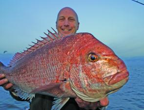 Dave O'Brien recently got stuck into plenty of quality snapper.