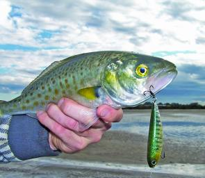 Casting walk-the-dog style surface lures is a very effective searching method in calm open water.