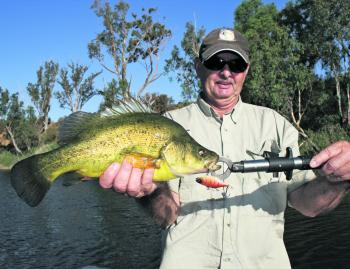 Kelvin Miles displays his golden perch, which was caught casting in the Loddon River.