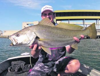 Snapper aren't the only predators you're likely to encounter in the river with mulloway generally being more than just an incidental by-catch.