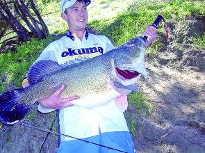 Mick Maher with a nice catch-and-release Murray cod from the upper reaches of Burrinjuck Reservoir. It fell to a slowly-worked spinnerbait.