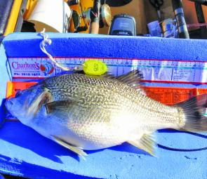 Fat and fit bass are on the cards in this catch, measure, photograph and release tournament for all forms of kayaks and canoes.