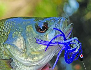 Spinnerbaits are very handy, reliable bass lures. They're easy to use and reasonably snag-resistant. Crank them slow enough for the blades to barely spin for best results