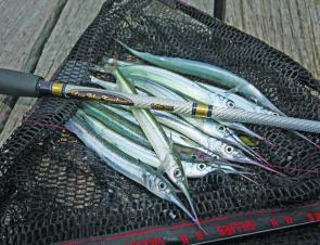 Garfish may not put up a fight but they make great baits and are tasty on the plate.