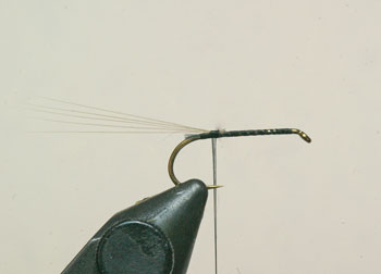 Place the hook in the vice, attach the thread and wind to the bend of the hook. Tie in the micro fibbets and take two turns of thread under them to make them sit up slightly.