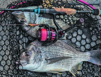 Big bream is what Forster/Tuncurry is renowned for, and winter is the best chance of a monster catch.