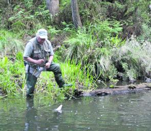 The first week of the June is the final straw for angling the trout streams. It has been a terrific season and 2012-13 looks like being a cracker.