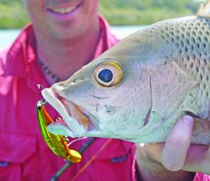 Mangrove jack will be about scaring the living daylights out of anglers in January.