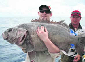 Bass groper are another deep water species that grows large yet is extremely tasty on the plate.