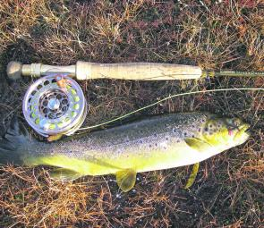 A nice early season brownie that took a Stick Caddis fished underneath an indicator.