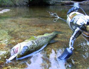 Small stream fishing with hardbodies lures is a great option for January.