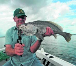 Mulloway are a common by-catch when chasing snapper in Pumicestone Passage.