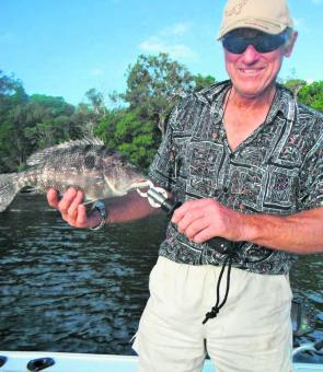 Spangled emperor are frequently caught in Pumicestone Passage when conditions are right.