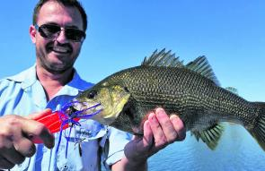 Quality bass are taken from the weed beds each season. This one took a liking to a spinnerbait.