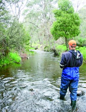 Geoffrey Dubois flyfishing in the trout-rich waters of the Adelong Creek. Many anglers have avoided the Tumut River whilst it has been in high flow by fishing in small creeks such as this.