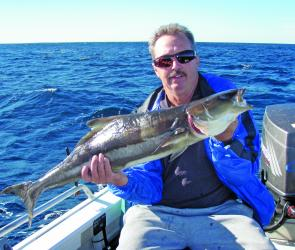 The run of cobia over the inshore reefs continues unabated.