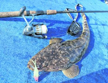 Big flathead are often a by-catch when chasing grunter.