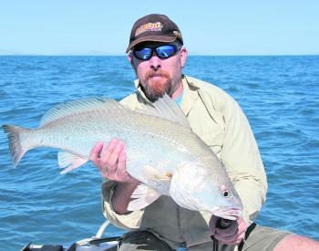 Black jew like this one are a real sign that you have found a viable offshore grunter spot.