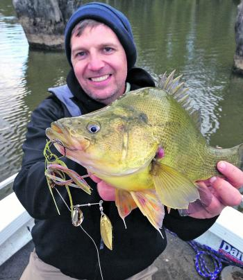 Yellowbelly love a spinnerbait slow-rolled past their nose.