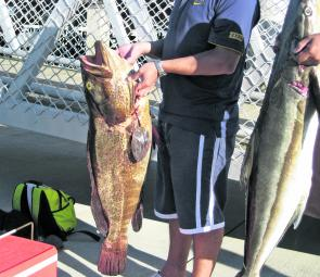 Cod and cobia are high on the target list this month.